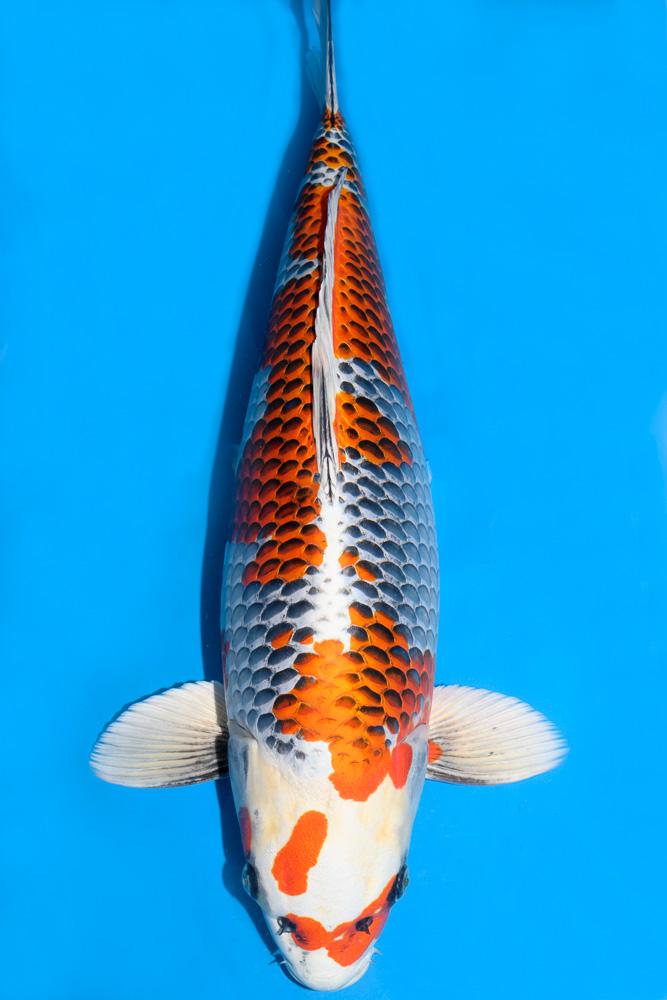 Fisch 4