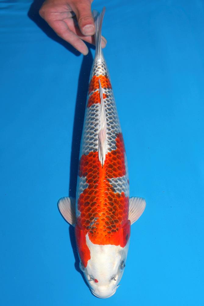 Fisch 5