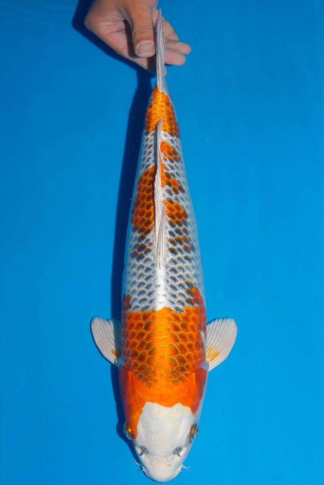 Fisch 1