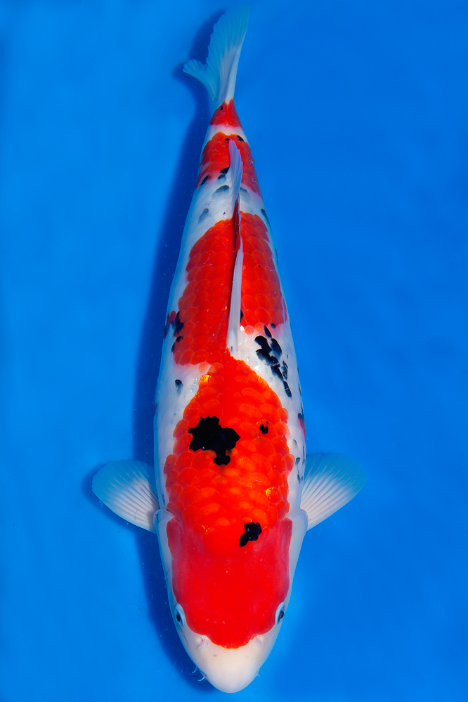 Fisch 7